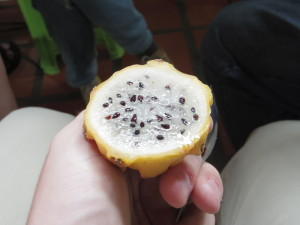 Pitahaya (Dragon Fruit)
