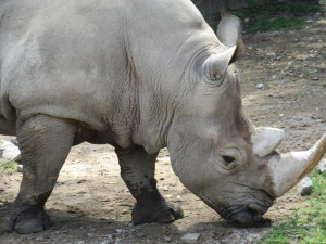 Hot in these rhinos